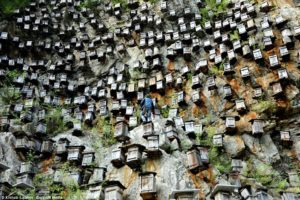 karstic_mountains_beekeeping