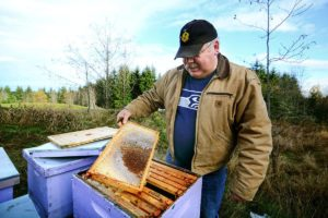 Buddy Depew, co-owner of Sequim Bee Farm, goes through his hives after someone poisoned about 20 of his hives. (Jesse Major/Peninsula Daily News)